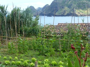 Garden and the beauty of San Lorenzo Bay