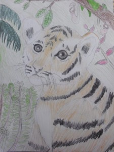 Tiger (colored pencils)