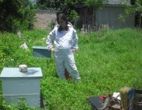 Honey Harvest, 22 weeks pregnant.. starting the baby early.