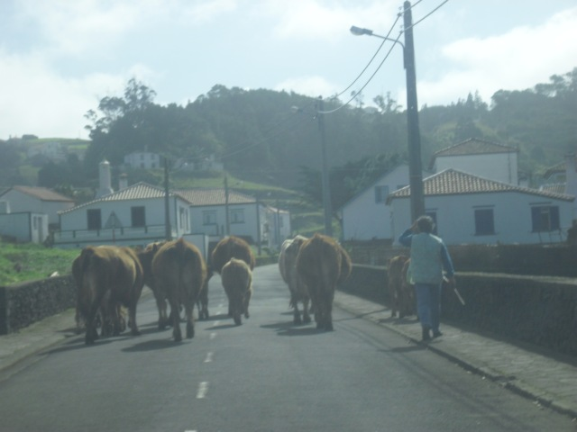 The village of Santa Barbara, and the cows from my story