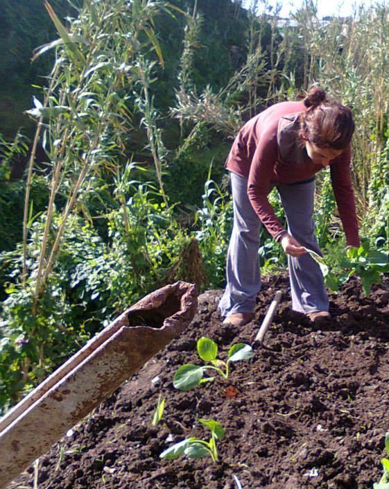 Rich Fertile Soil of the Azores