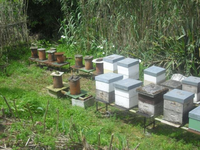 Honey Bees, Abelhas