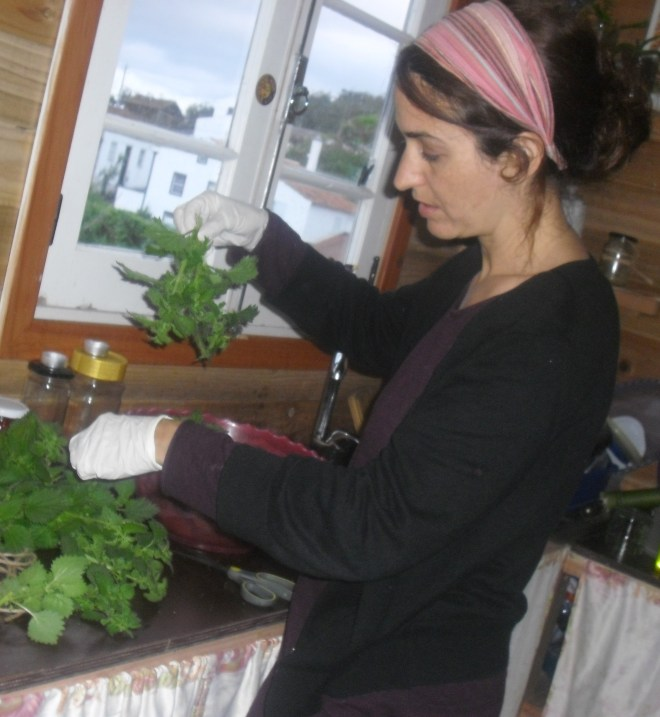 Tying the Nettle in bundles, WITH GLOVES
